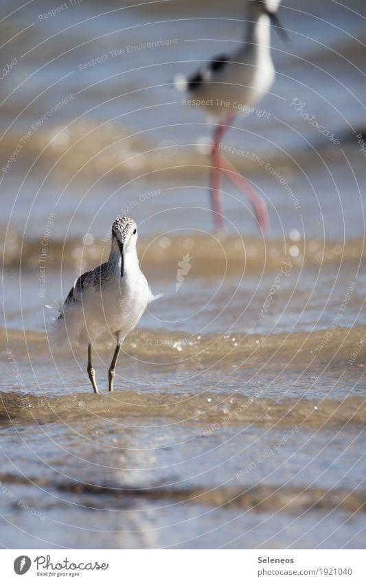nasse Füße Ausflug Sommer Meer Wellen Umwelt Natur Wasser Küste Seeufer Flussufer Strand Tier Vogel 2 natürlich Ornithologie Farbfoto Außenaufnahme Menschenleer