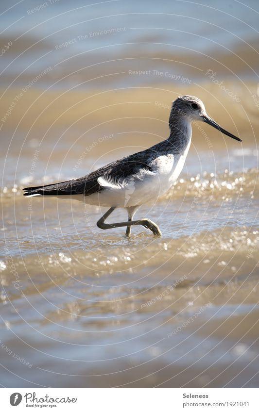 Grünschenkel Natur Meer Tier Strand Umwelt natürlich Küste See Vogel Wildtier Flügel Fluss Seeufer nah Flussufer Tiergesicht