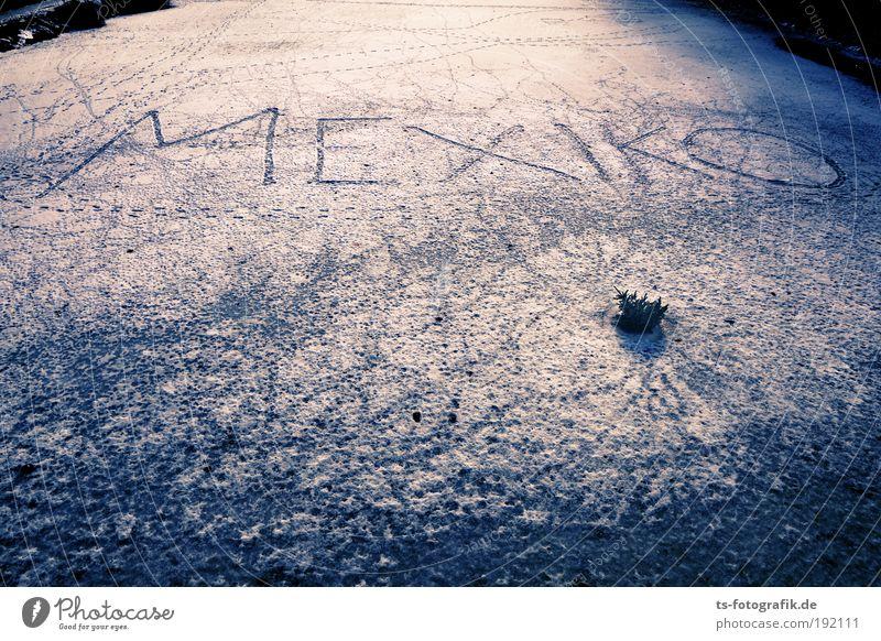 Les Humphries on Ice? blau weiß Ferne Winter kalt Schnee Spielen grau träumen Eis laufen Kommunizieren Frost zeichnen Fernweh exotisch