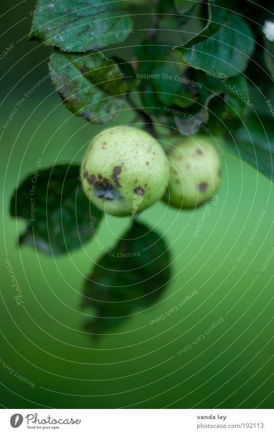 Bio Lebensmittel Frucht Apfel Ernährung Bioprodukte Vegetarische Ernährung Gesundheit Erntedankfest Natur Pflanze Baum Blatt natürlich rund saftig süß grün rein