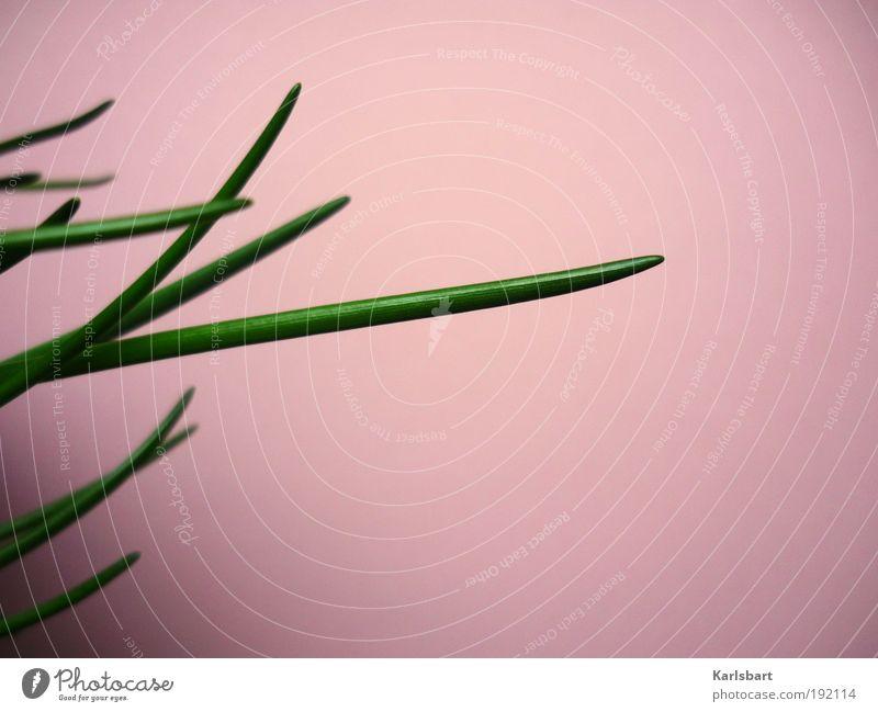 mädchenfoto. schnittlauch. grün schön Pflanze Farbe Leben Ernährung Lebensmittel Linie rosa Design Häusliches Leben Lifestyle Küche Kräuter & Gewürze Restaurant
