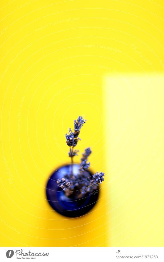 Lavendel auf gelbem Hintergrund Lifestyle Reichtum elegant Stil Design exotisch Freude Freizeit & Hobby Häusliches Leben Wohnung Haus Traumhaus Innenarchitektur