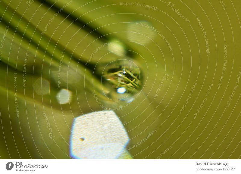 Tropfen mit Nadeln gefüllt elegant Wellness Leben harmonisch Natur Pflanze Tier Wassertropfen Frühling Sommer Herbst Winter Klimawandel Unwetter Regen Gewitter