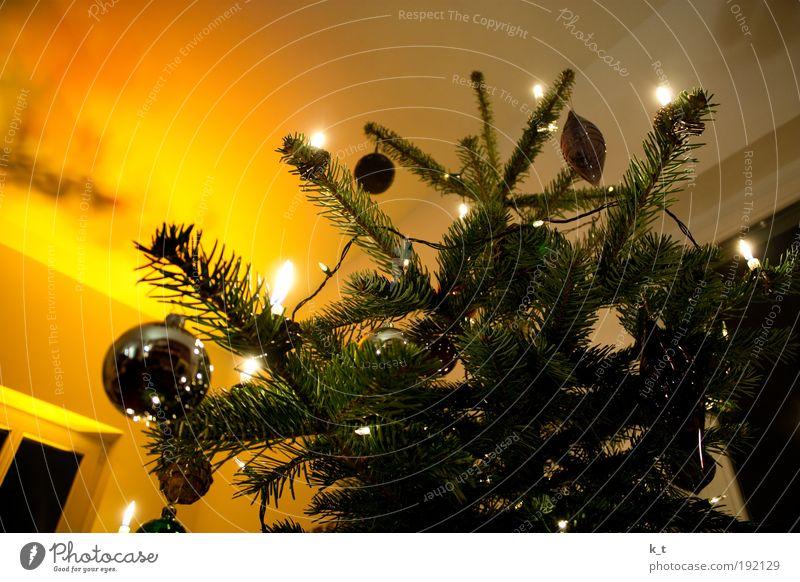 Noch 10 Monate und 1 Tag Dekoration & Verzierung Winter Tanne Kerze glänzend hell Wärme gelb Stimmung Romantik Farbfoto Innenaufnahme Weihnachten & Advent