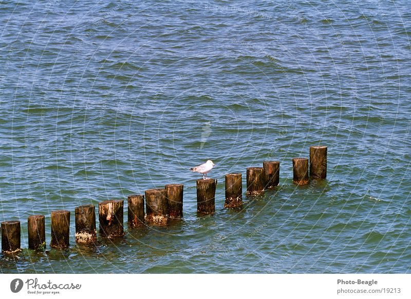 Buhnenbesetzung... ;-) See Meer maritim Möwe Zingst Möwenvögel Ostsee Baltic Sea Wasser sea seaside ocean wave waves holiday holidays vacation