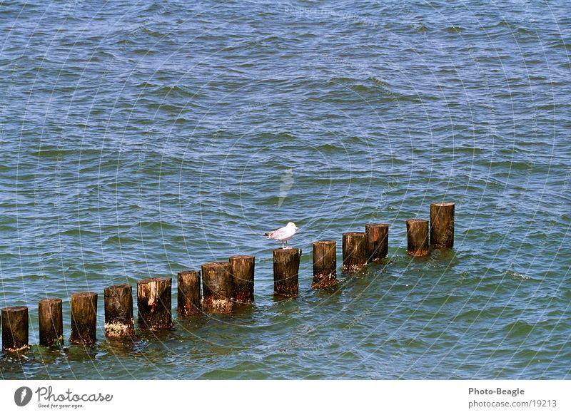 Buhnenbesetzung... ;-) Wasser Meer See Ostsee Möwe maritim Zingst Mecklenburg-Vorpommern Möwenvögel