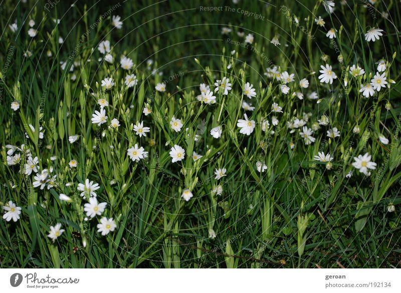 Grün-Weiß Natur Pflanze Sommer Blume Gras Blüte Park Wiese atmen Blühend Duft genießen Wachstum frisch natürlich saftig unten grün weiß Gelassenheit ruhig