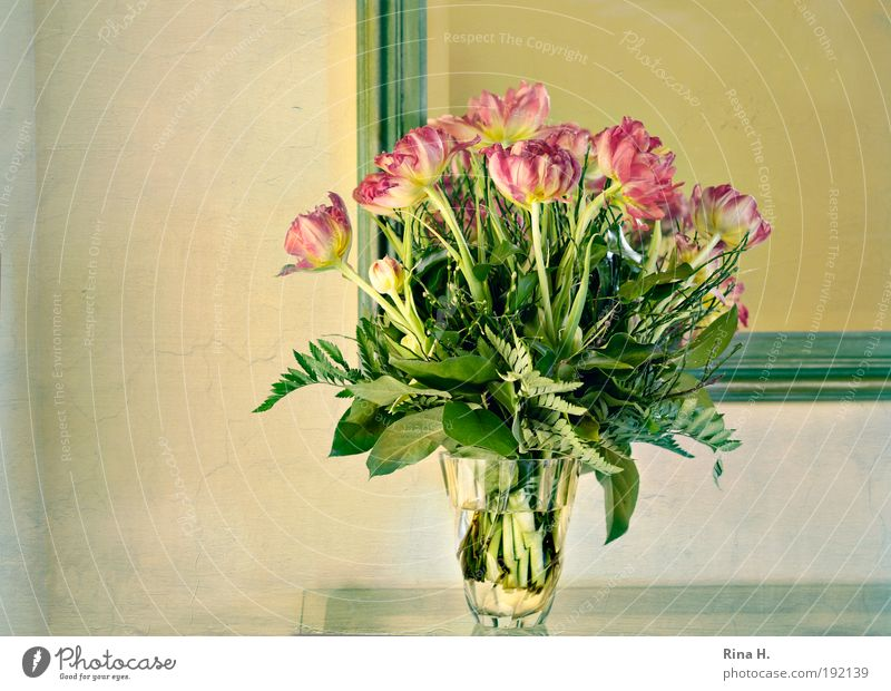 Guten Morgen Frühling ! elegant Stil Innenarchitektur Dekoration & Verzierung Tulpe leuchten gelb grün rot Glück Lebensfreude Frühlingsgefühle Vorfreude