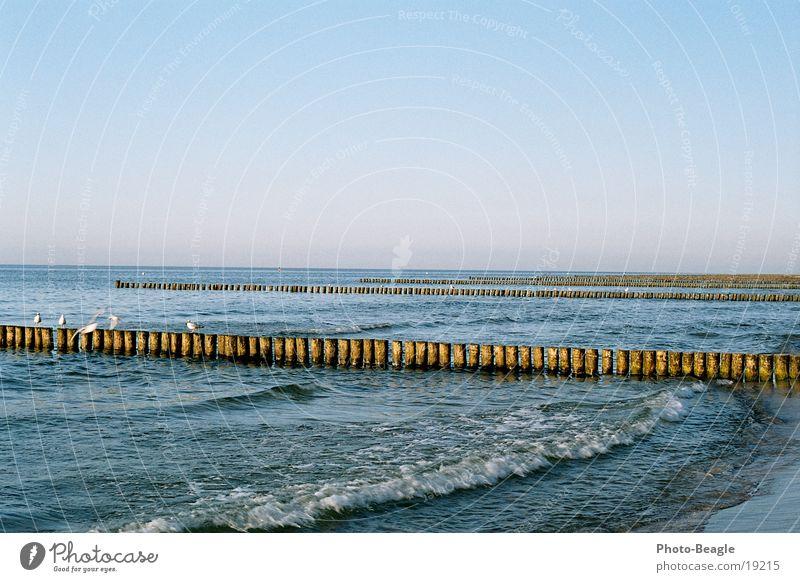 Letzter Abend See Abendsonne maritim Möwe Zingst Fernweh Möwenvögel Ostsee Baltic Sea Wasser sea seaside ocean wave waves holiday holidays vacation gulls
