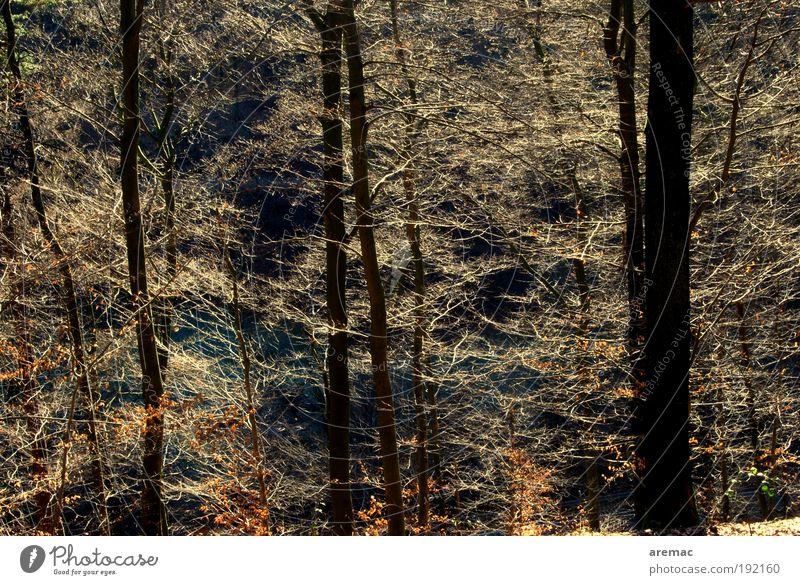 Lichtblick Natur Landschaft Sonnenlicht Herbst Blatt Wald leuchten ästhetisch glänzend schön braun Frühlingsgefühle Warmherzigkeit Ast Lichtstimmung Farbfoto