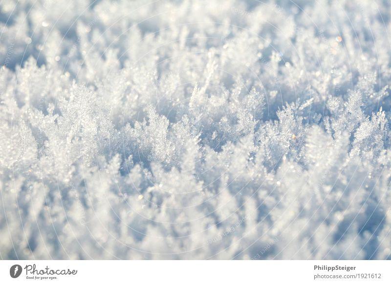 Eiskristalle Winter Natur Urelemente Wasser Frost Schnee kalt bizarr boden gefroren Farbfoto Außenaufnahme Menschenleer Textfreiraum oben Textfreiraum unten