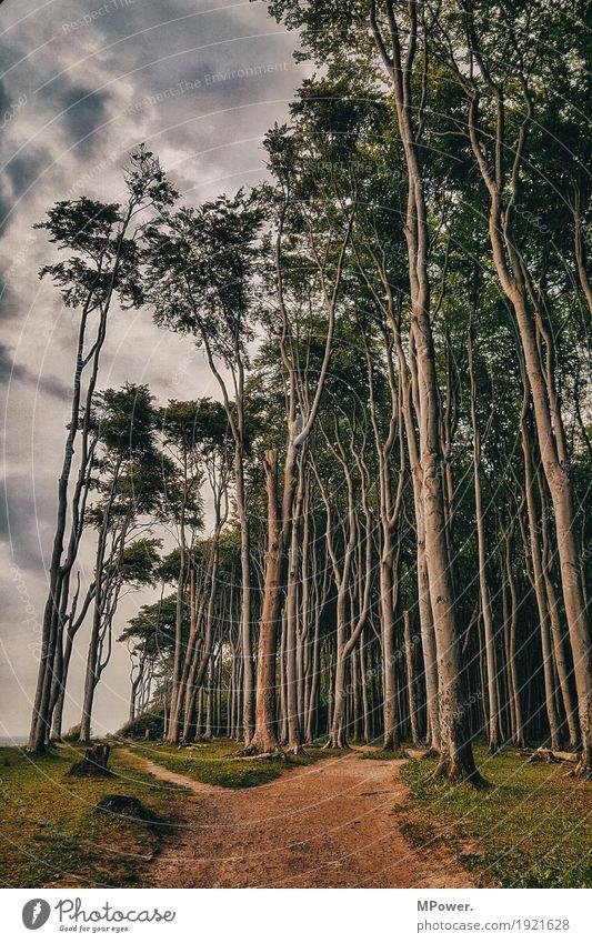 zauberwald Wald Baum spukhaft Wege & Pfade krumm Biegung fantastisch mädchenhaft Märchen Märchenlandschaft Märchenwald Ostsee wandern Ausweg unheimlich Küste