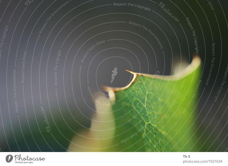 Blatt Natur Pflanze grün ruhig Winter Herbst natürlich Bewegung grau elegant ästhetisch authentisch Blühend einzigartig Spitze