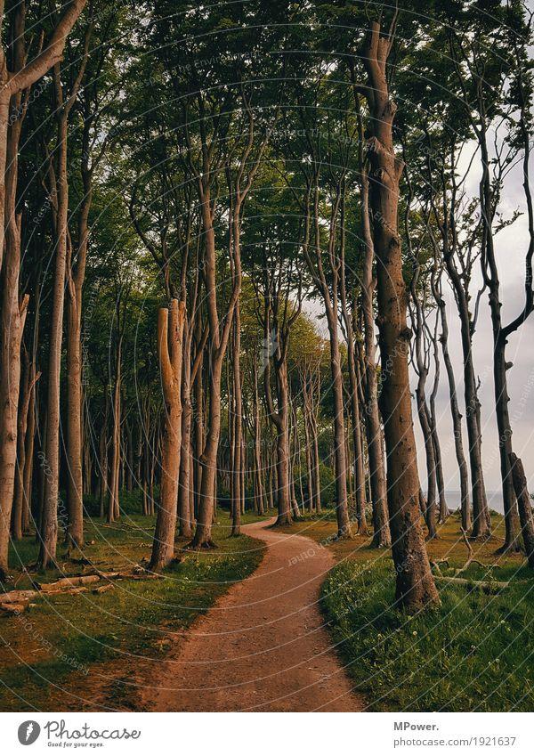 zauberwald Baum Wald Wege & Pfade Küste wandern fantastisch Ostsee Märchen unheimlich Biegung spukhaft krumm Märchenwald Ausweg mädchenhaft Märchenlandschaft