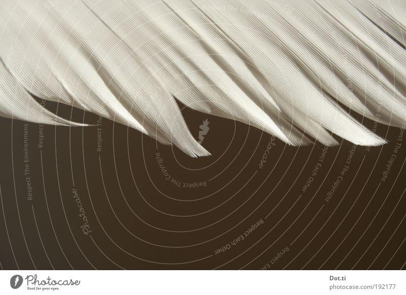 Feder weiß Tier Vogel Hintergrundbild ästhetisch Feder Flügel Federvieh organisch