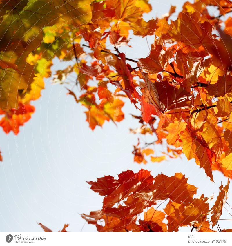 sunny day Himmel Natur blau schön Baum rot Pflanze Blatt ruhig Umwelt gelb Herbst Luft Park Wetter gold