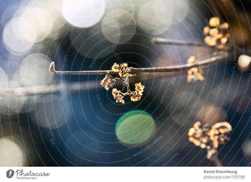 Lichter des Herbstes Natur weiß schön Pflanze Zweig Lichtspiel herbstlich Blendenfleck laublos Makroaufnahme