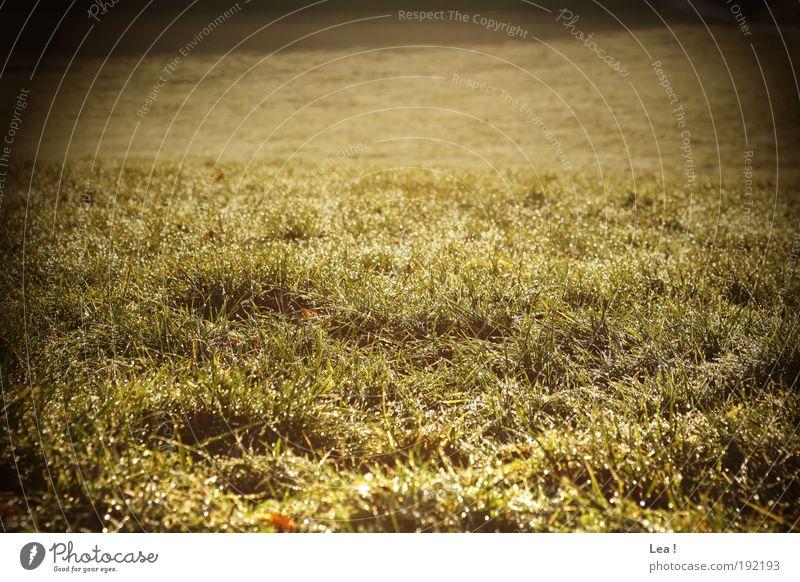 Wintertau Natur Gras Wiese nass natürlich Freiheit Farbfoto Außenaufnahme Tag