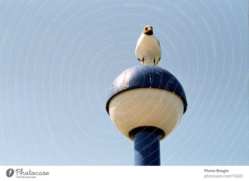 Jonathan? Vogel dreckig Laterne Möwe Möwenvögel Zingster Seebrücke