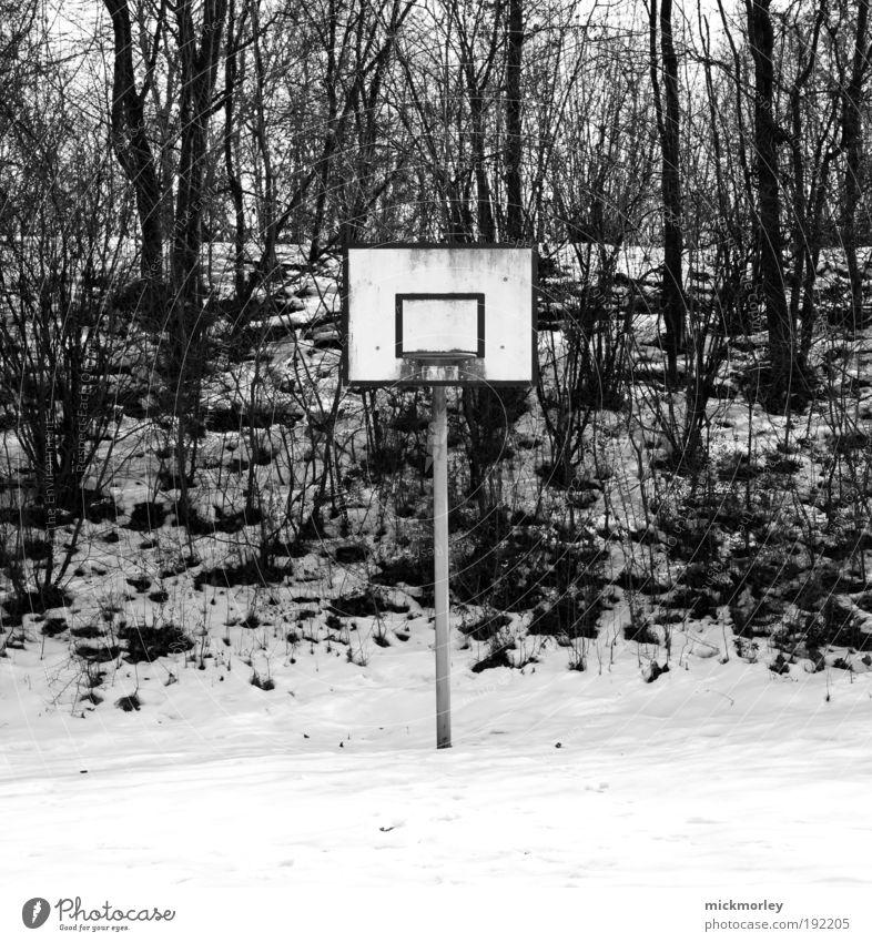 Basketball Desaster Winter Freude Wald Umwelt Wiese Schnee Spielen Freiheit Freizeit & Hobby dreckig frisch außergewöhnlich Coolness trashig Sport-Training