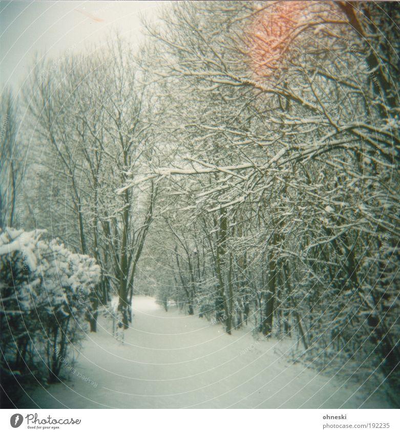Heizstrahler Natur Baum Pflanze Winter Einsamkeit Wald Schnee Wege & Pfade Park Landschaft Eis Umwelt Frost Sehnsucht Erwartung Holga