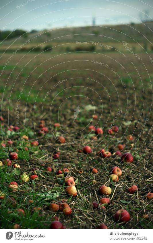 Selbstbedienung Natur alt Baum rot Umwelt Herbst Wiese natürlich Lebensmittel braun Frucht liegen wild Feld trist authentisch