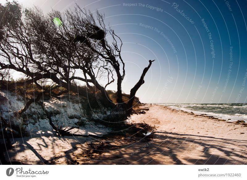Wind im Haar Natur Pflanze Wasser Baum Landschaft Ferne Strand Umwelt Küste Holz Sand hell wild Horizont frei Idylle