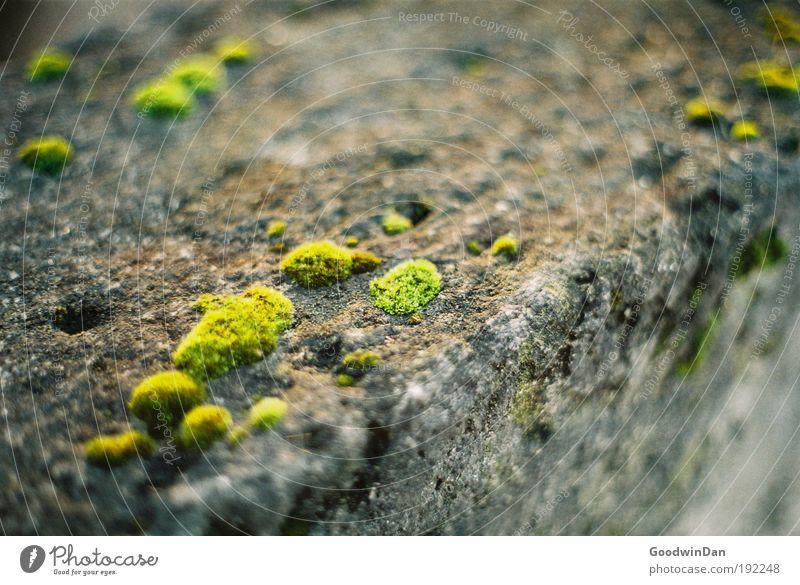 Analoges Moos grün grau Stein Mauer dreckig nass natürlich Sehnsucht analog Duft Frühlingsgefühle