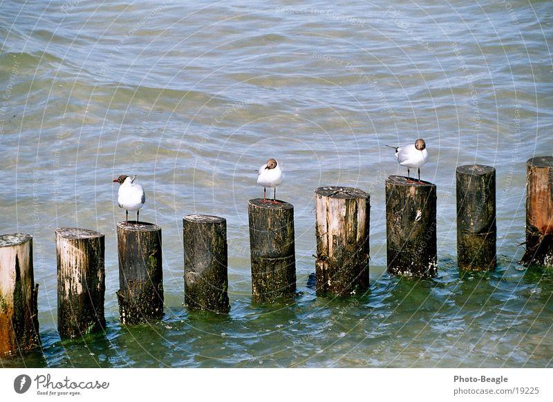 Mindestens eine/r ist _immer_ anders rum... ;-)) Wasser Meer See Ostsee Möwe Buhne