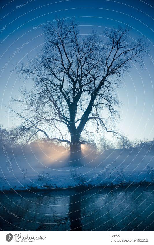 Morgenstund' Natur Himmel Baum Sonne blau Pflanze Winter kalt Park Zufriedenheit Religion & Glaube Schönes Wetter Schneelandschaft Sonnenaufgang