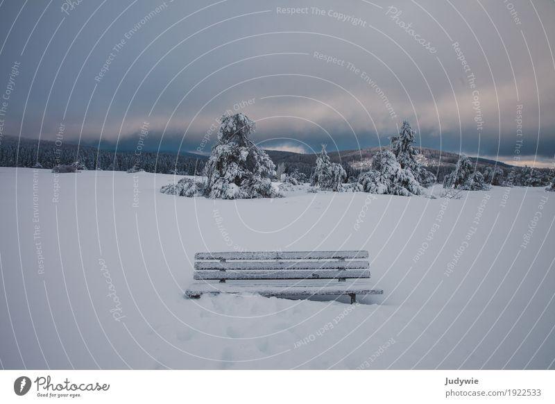 Ein frostiges Plätzchen Schnee Winterurlaub Umwelt Natur Landschaft Himmel Gewitterwolken Horizont Klima Wetter Eis Frost Schneefall Baum Tanne Wald Hügel Heide