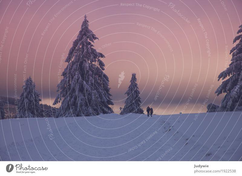 Rosa Winterwunderland Mensch Natur Pflanze schön Baum ruhig Wald Umwelt Leben Schnee Paar Zusammensein gehen Freundschaft wandern