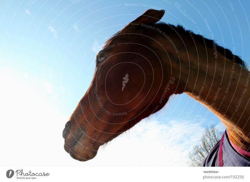 Böses Pferd Tier Gefühle natürlich Stimmung Kraft stehen bedrohlich beobachten Macht einzigartig Wut Tiergesicht nah Wachsamkeit Mut