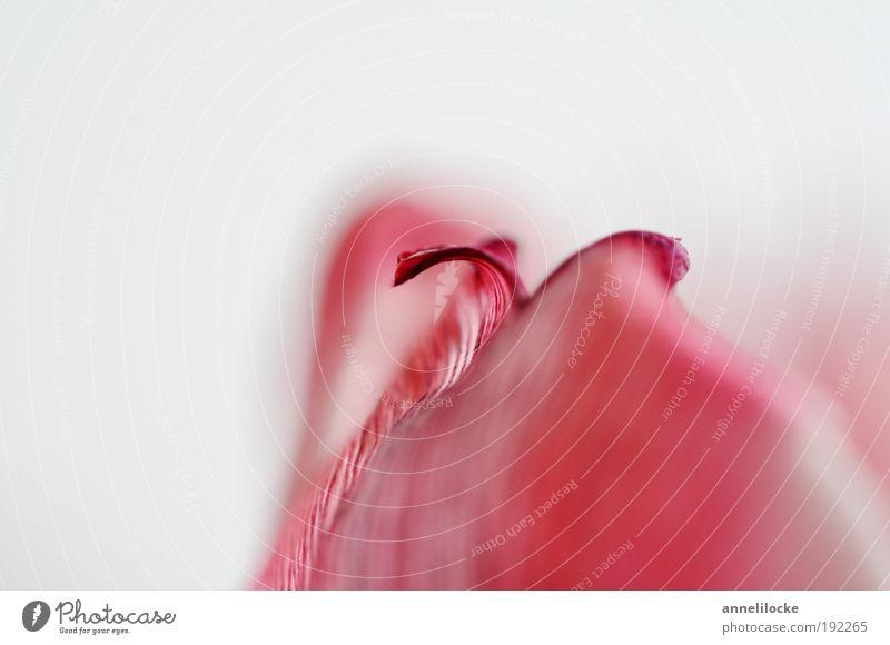 Blütenmalerei Natur Pflanze Frühling Blume Tulpe Grünpflanze Dekoration & Verzierung Blumenstrauß Blühend ästhetisch schön rot Wellness abstrakt geschwungen