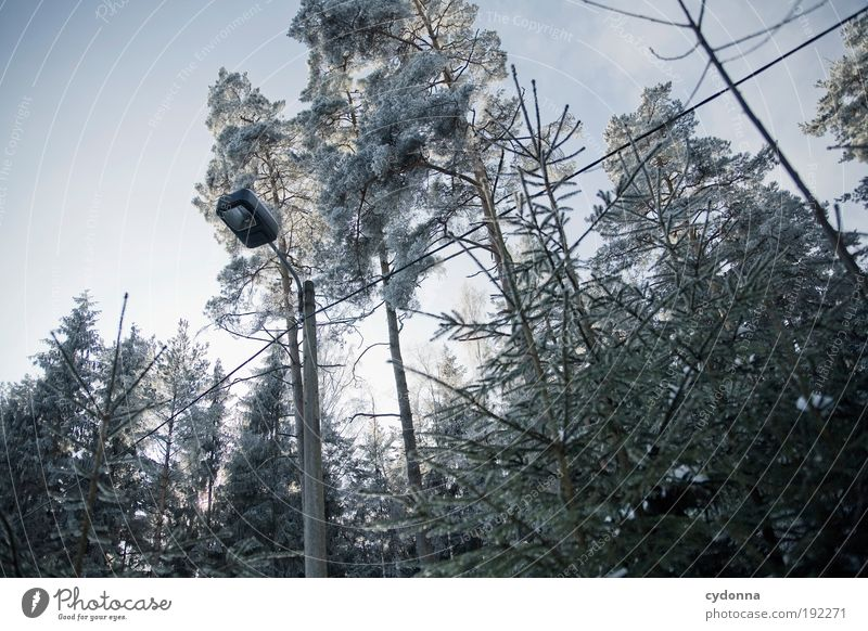 Frostig Natur Baum Winter ruhig Einsamkeit Wald kalt Leben Freiheit Umwelt träumen Eis Zeit ästhetisch Wandel & Veränderung