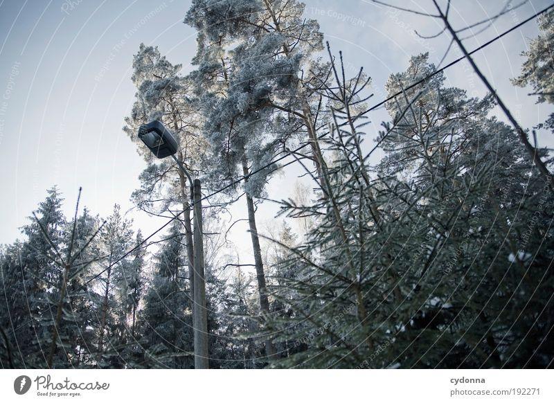 Frostig Umwelt Natur Wolkenloser Himmel Winter Eis Baum Wald ästhetisch Einsamkeit Freiheit geheimnisvoll Idee Leben Nostalgie ruhig stagnierend träumen Verfall