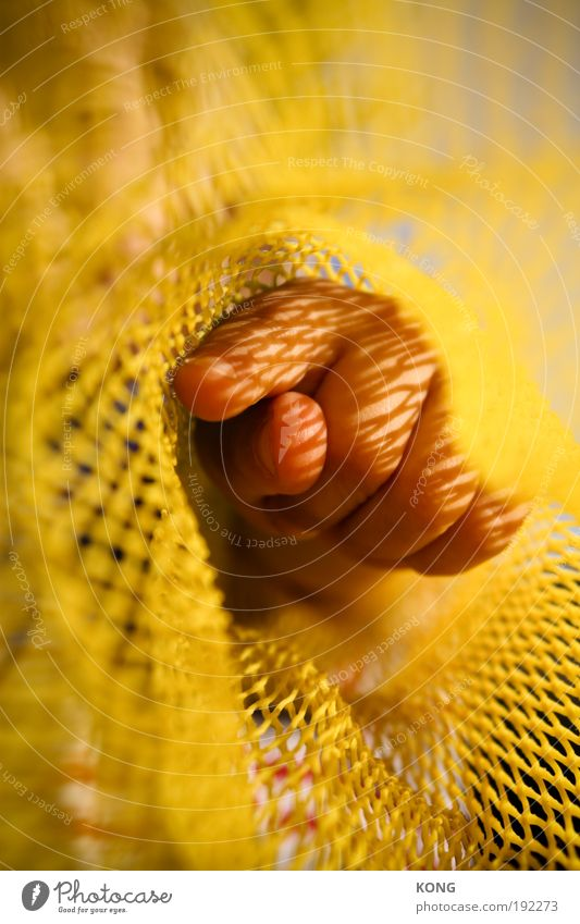 fingerzeig Kind Hand Sommer gelb Finger Netzwerk Netz Ziel Bildung beobachten berühren Neugier entdecken Kindergarten gefangen Interesse