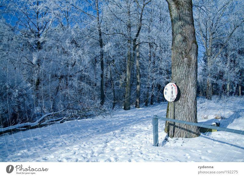 Winterwunderland Ausflug Freiheit Winterurlaub wandern Umwelt Natur Landschaft Eis Frost Schnee Baum Wald Bewegung Einsamkeit Erholung geheimnisvoll Idylle