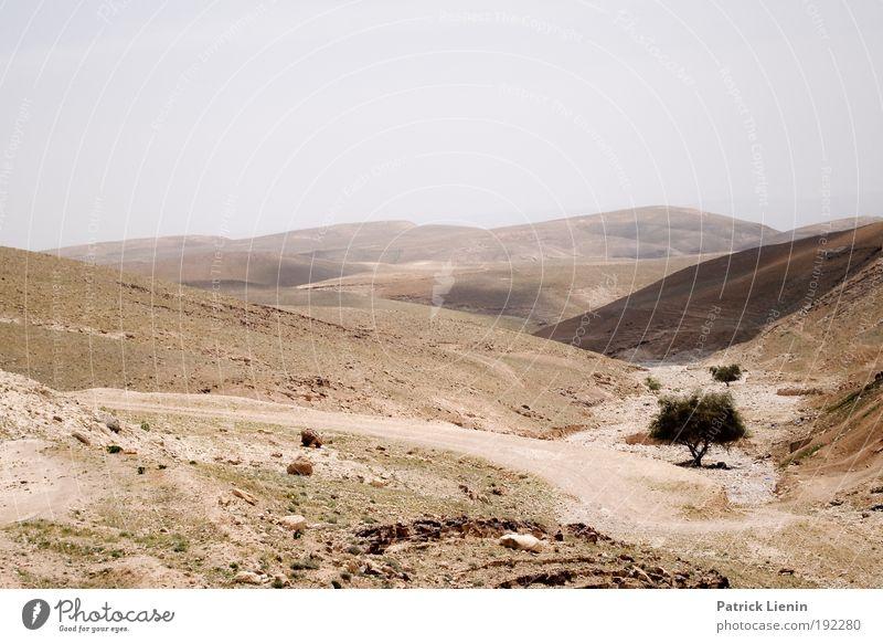 West bank Himmel Baum Einsamkeit Wege & Pfade Wärme Sand Landschaft Umwelt Ausflug trist Aussicht Klima Wüste heiß Hügel Konflikt & Streit