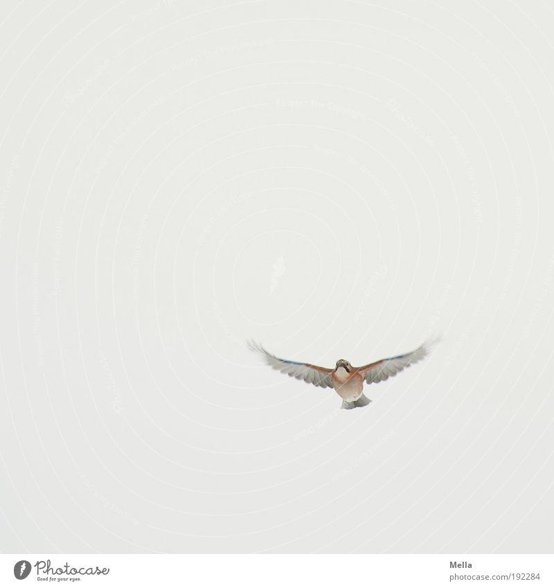 Entgegenkommen Natur Himmel Tier Leben Bewegung Freiheit Luft hell Vogel klein Umwelt fliegen frei rein natürlich Wildtier