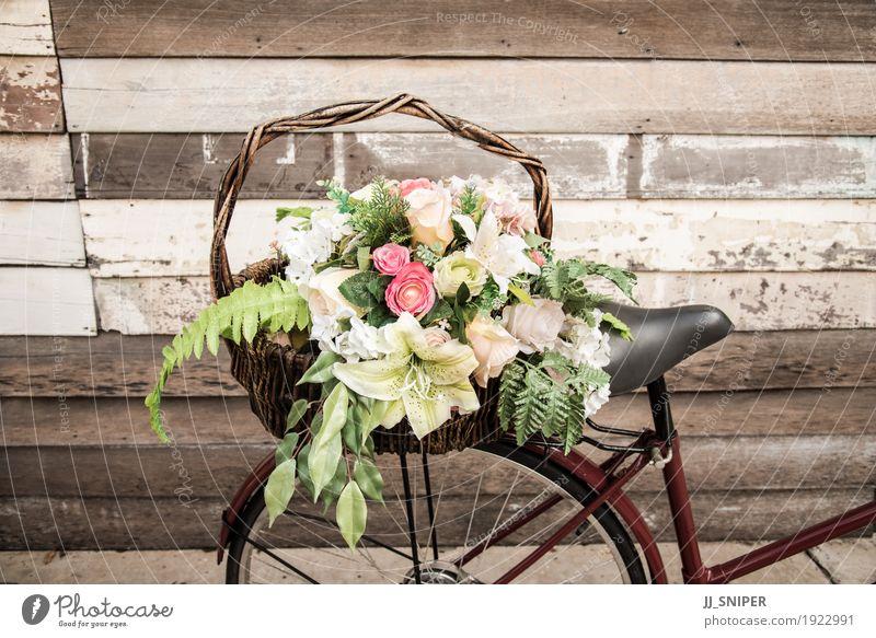 Weinlesefahrrad mit Blume Design Ferien & Urlaub & Reisen Sommer Winter Schnee Garten Dekoration & Verzierung Natur Pflanze Wetter Baum Gras Blüte Wald Verkehr