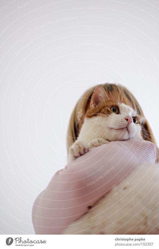 ...Have a Kit-Cat Mensch feminin Frau Erwachsene Haustier Katze Tiergesicht tragen frech kuschlig nah Neugier niedlich Zufriedenheit Nervosität Schüchternheit