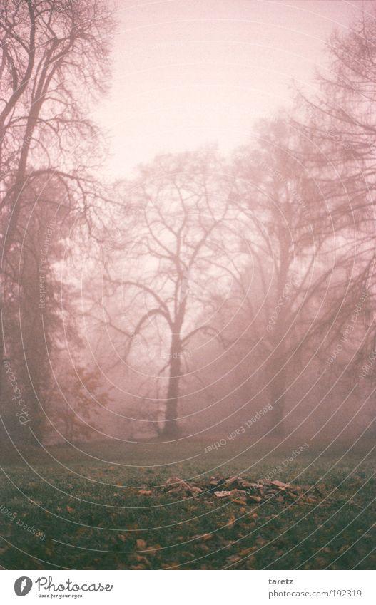 Steinhaufen im Nebel Natur Landschaft Herbst Baum Gras Park fantastisch grün Wiese ruhig grau Textfreiraum Winter kahl Farbfoto Gedeckte Farben mehrfarbig