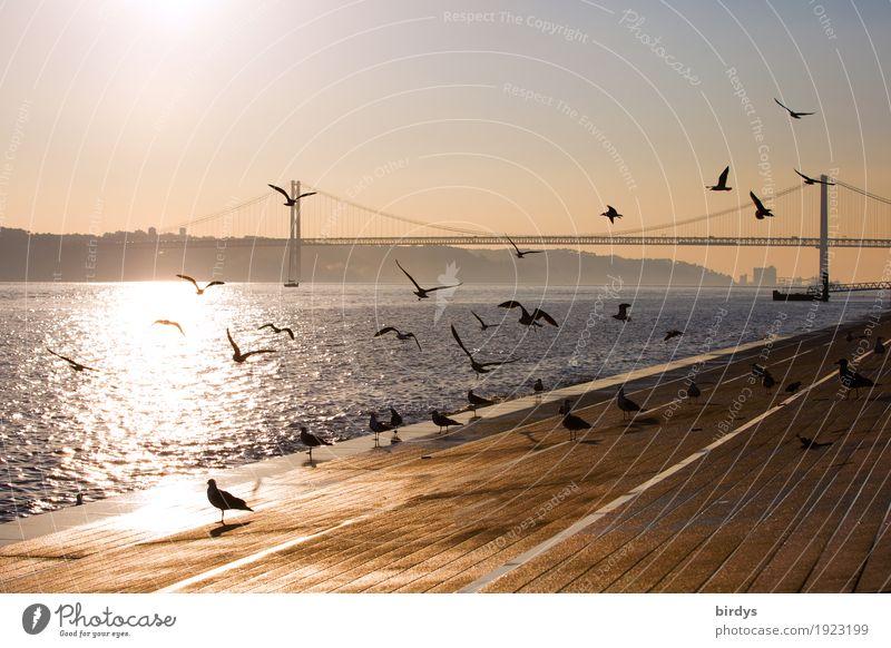 Flugshow in Lissabon Ferien & Urlaub & Reisen Tourismus Städtereise Sonnenaufgang Sonnenuntergang Sonnenlicht Schönes Wetter Flussufer Tejo Tejo-Brücke Portugal