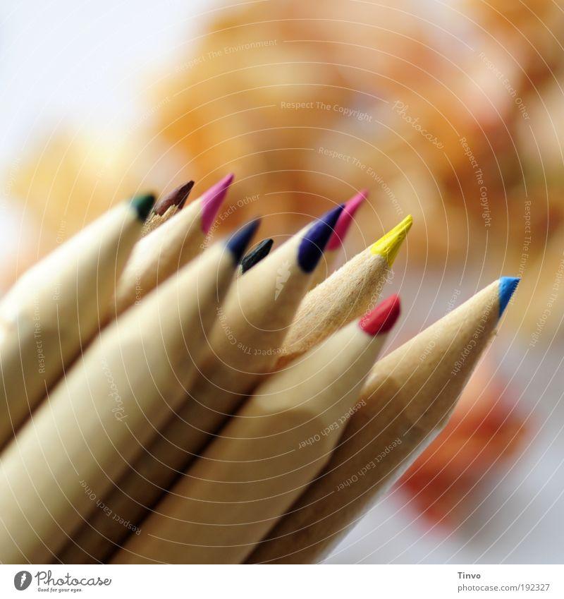 Stuntbifte Kunst Freizeit & Hobby einzigartig Spitze Kindheit zeichnen malen Kreativität Idee positiv Farbstift Inspiration Makroaufnahme angespitzt