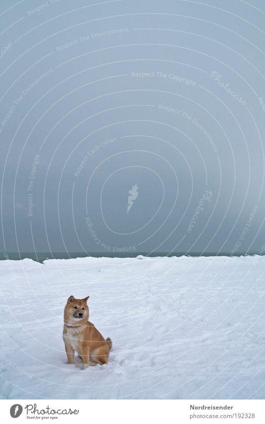Komm rüber.....spiel mit mir Hund Natur Ferien & Urlaub & Reisen Meer Winter Freude Strand Tier Schnee Küste Eis Freizeit & Hobby wandern Klima Abenteuer