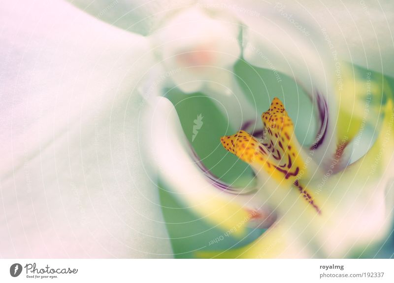 Blume Natur Frühling Pflanze Orchidee gelb weiß mehrfarbig Innenaufnahme Schwache Tiefenschärfe