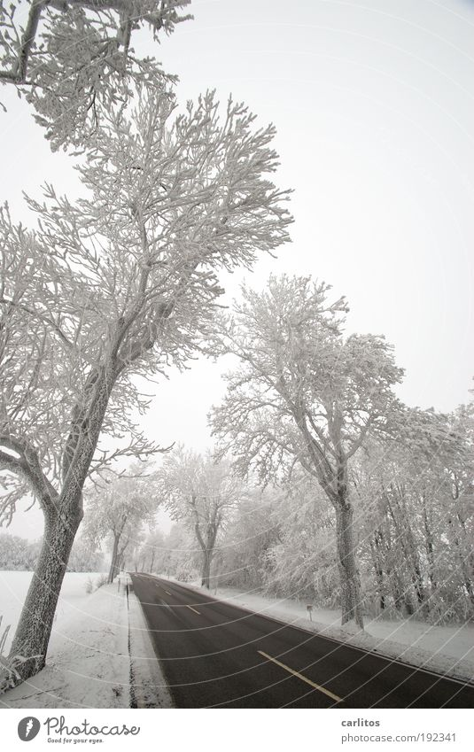 Niedersächsisch Sibirien Landschaft Winter Eis Frost Schnee Baum Verkehrswege Autofahren Verkehrsunfall Straße ästhetisch kalt schwarz weiß Frühlingsgefühle