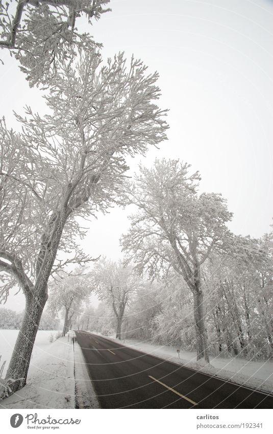 Niedersächsisch Sibirien Natur weiß Baum Winter schwarz Einsamkeit Straße kalt Schnee Bewegung Landschaft Eis Ordnung ästhetisch Frost Idylle