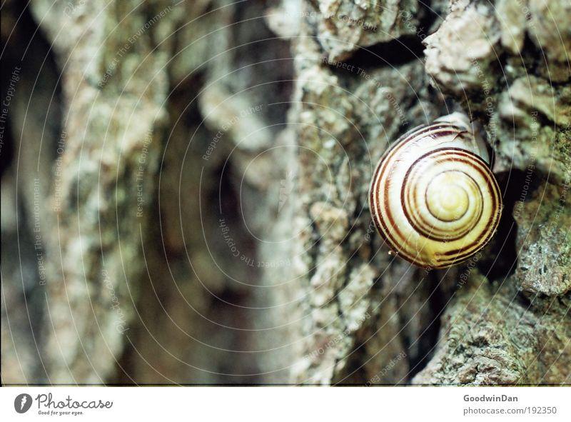 Analoge Schnecke Natur Wetter Baum Baumrinde Tier 1 hocken Blick Farbfoto Außenaufnahme Menschenleer